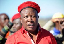Shooting incident: Reasons why Malema must be jailed. Photo: AfriForum