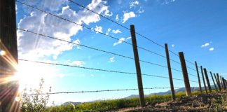 Farm attack averted: Visiting men contain two attackers, Dalmada