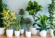 How to Grow a Healthy Indoor Garden: 5 Pro Tips