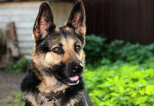 Westville armed home invasion: K9 unit sniffs out attacker in cupboard. Photo: Pixabay