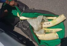 Two nabbed for dealing in elephant tusks, Point, Durban. Photo: SAPS