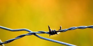 Farm attack: Bogus cops ask that dogs be locked up, attack couple, Dewetsdorp. Photo: Pixabay