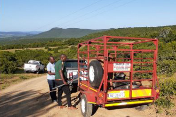 Vryheid farmer works with police to trace 12 stolen cattle. Photo: SAPS