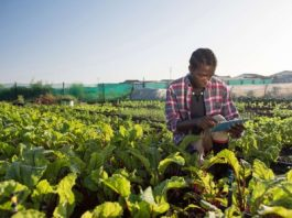 Agricultural Technology Exhibition and Conference Coming to Cape Town