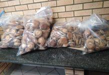 Flying Squad recover abalone arrest 6 suspects, Mfuleni. Photo: SAPS