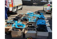 R7 mill worth of abalone recovered, foreign nationals arrested, Colesburg. Photo: SAPS
