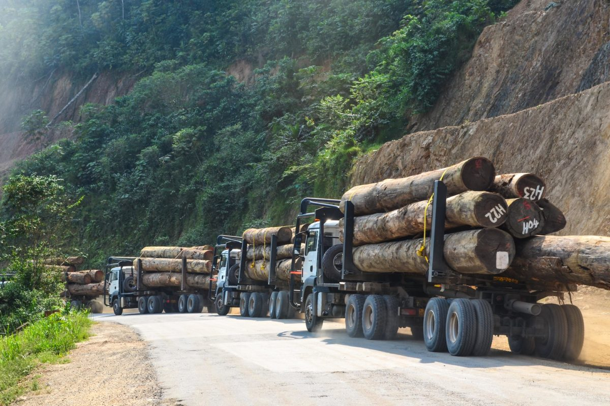 Transporting timber. Image by JBDodane via Flickr (CC BY-NC-2.0)