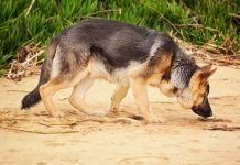 K9 unit sniffs out drugs, 3 dealers arrested, Olifantshoek. Photo: Pixabay