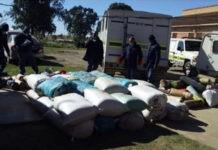 Mbizana police lauded for the biggest dagga haul worth R2 million. Photo: SAPS
