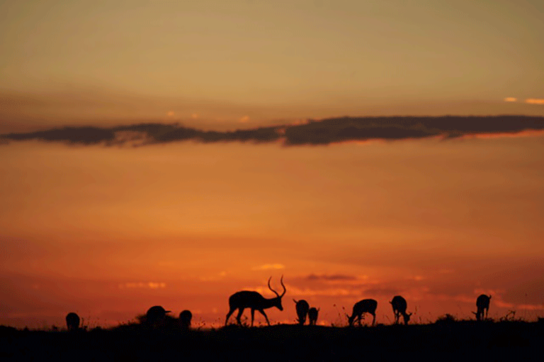 Sunset in East Africa. Photo by Felipe Rodriguez.