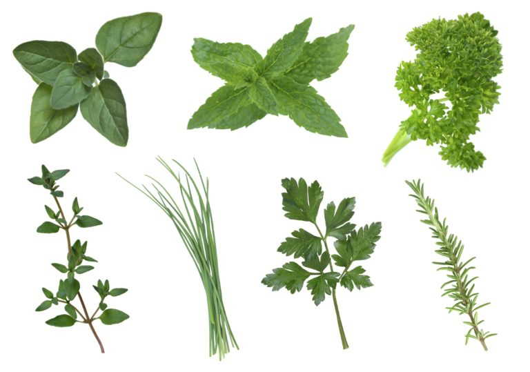 Best Medicinal Herbs For You