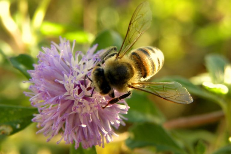 Brazil's native bees are vital for agriculture, but are being killed by it