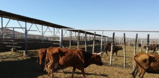 4 Cases of stock theft, suspects caught red handed, NC