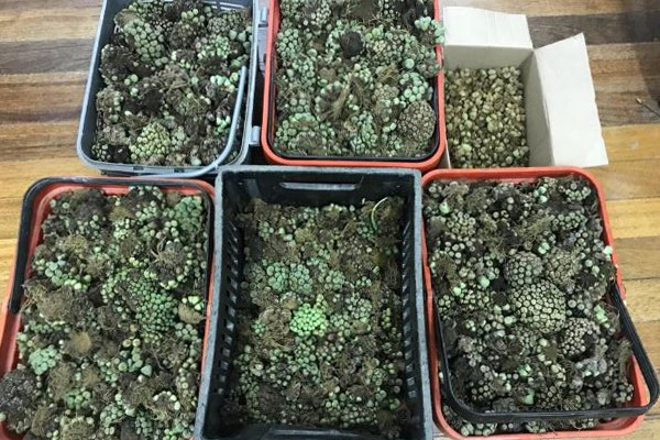 Four held with endangered plants worth R2 million. Photo: SAPS