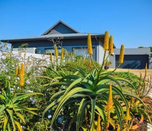 Renishaw Hills' Elsa Pooley shares her top 8 winter plants for KwaZulu-Natal gardens