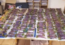 Police confiscated Khat worth R200k, Kimberley. Photo: SAPS