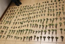 Taxi driver arrested with R7k worth of Khat, Kimberley. Photo: SAPS