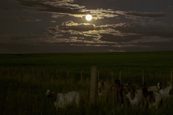 Farm attack averted, alert farmer fires off warning shots , Lindley - Bethlehem