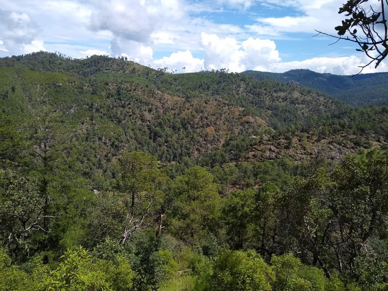 Bosques templados de Durango