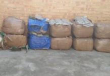 R377k worth of dagga recovered, suspect in court, Tonga. Photo: SAPS