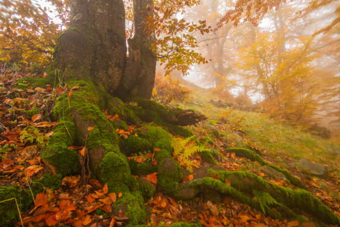 4750 Hectares of Old-Growth Ukrainian Forest Receive the Highest Level of Protection
