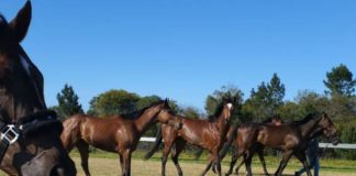 FF Plus - 'Attack on horses absolutely revolting'