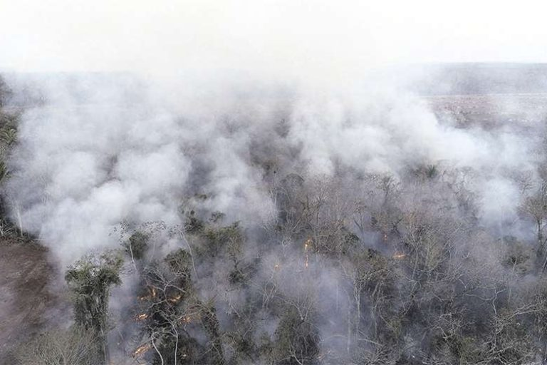 A million hectares ablaze as forest fires sweep through Bolivia   South Africa Today