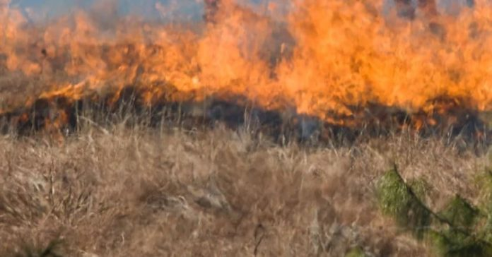 Tokologo fires: Free State government declares provincial disaster area